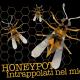 Honeypot, trappola per cracker