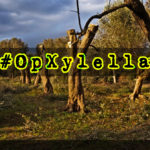 Anonymous Italia lancia - #OpGreenRights Xylella il batterio killer